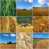 Harvesting. Collage form nine photos. — Stock Photo
