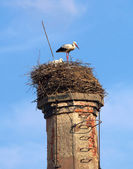 Pair of stork -2 — Stock Photo