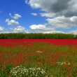 Red meadow. — Stock Photo