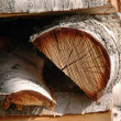 Birch Tree Logs — Stock Photo