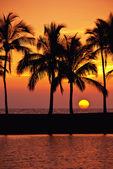 Hawaiian palm tree zonsondergang — Stockfoto