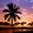 Hawaiian palm tree sunset — Stock Photo #11494814