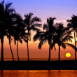 Hawaiian palm tree sunset - Stock Photo