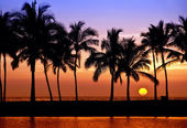 Hawaiian palm tree sunset — Foto Stock