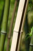 Bamboo closeup — Stock Photo
