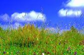 небо трава — Стоковое фото