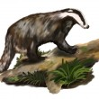 Badger on the trunk — Stock Photo