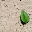 Parched earth — Stock Photo #11432284