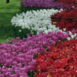 Tulip park — Stock Photo #11490039