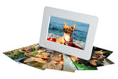 White digital photo frame with photos of a chihuahua isolated on the white background — Stock Photo