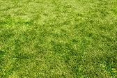 Veld gras textuur — Stockfoto