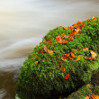 Moss covered rock — Stock Photo