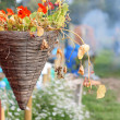 Stock Photo: Hanging basket