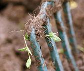 Bifurcación del jardín — Foto de Stock