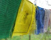 Himalayan Prayer flags — Stock Photo