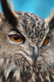 Eagle Owl close up — Fotografia Stock