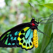 Stock Photo: Colourful Butterfly