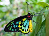 Colourful Butterfly — Stock Photo