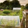 Stock Photo: Allotment gardens