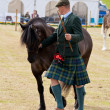 Nairn Farmers Show - Stock Photo