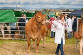 Nairn Farmers Show — Stock Photo