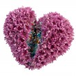 Stock Photo: Heart of flowers