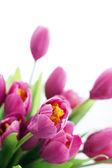 Nep roze mooie bloemen geïsoleerd — Stockfoto