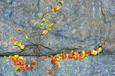 Autumn life on a stone — Stock Photo
