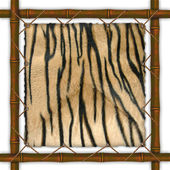 Frame with a skin of a tiger — Stock Photo