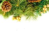 Tarjeta de navidad. rama de un árbol de la piel y el abeto conos sobre un fondo blanco — Foto de Stock