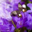 Flowers and batterfly, dark blue hand bells — Stock Photo