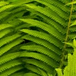 Green leaves of fern, tropical forest, are in sunbeams — Stock Photo