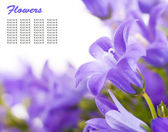 Flowers on a white background, dark blue hand bells with dew drops — Stock Photo