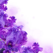 розовые орхидеи в капли росы — Стоковое фото