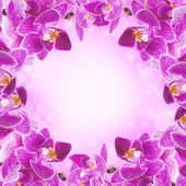Orchids not in focus and painted in different colors — Stock Photo