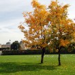 Foto de Stock  : Two trees, yellow leaves, autumn in Paris, Les Tuileries Gardens