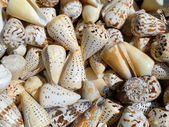 Lot of Sea Slugs, background — Stock Photo