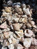 Sea slugs blend — Stock Photo