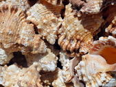 Sea slugs — Stock Photo