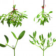 Stock Photo: Mistletoe set