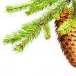 Branch of fir with cone — Stock Photo
