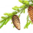 Branch of fir with cone - Stock Photo