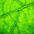 Leaf background — Foto de stock #11387941
