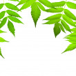 Green leaves border with copy-space — Stock Photo #11387975