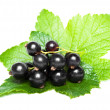 Black currant with green leaves — Stock Photo