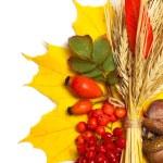Autumn leaves, wheat and acorn, rowan, briar isolated on white — Stock Photo #11388293