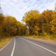 Curving autumn road in forest — Stock Photo