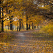 Autumn forest pathway — Stock Photo