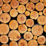 Wood logs background — Stock Photo #11388480