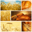 Beautiful bread and wheat collage — Stock Photo